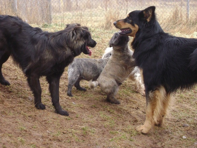 D&L Country Kennels