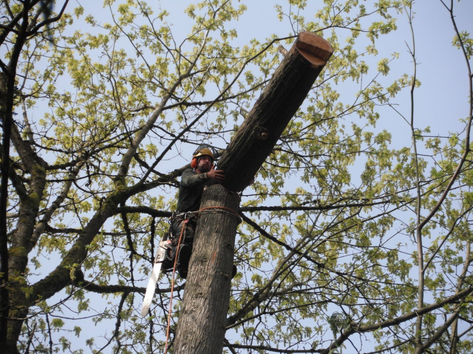 Campbell's Tree Care